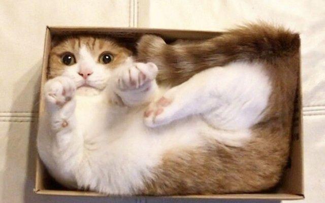 ¿Por qué los gatos no pueden resistirse a una caja… incluso si es imaginaria?