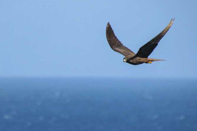 ¿Aves terrestres volando sobre mar abierto miles de kilómetros?