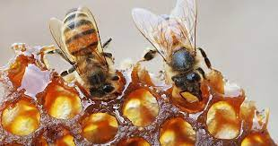 Bee gold: Honey as a superfood